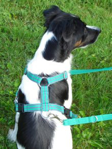Ttouch Dog Harness Uk