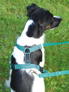 Medium dog harness