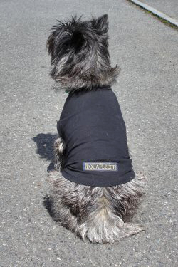 T shirts for dogs
