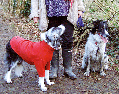Mucky Dog next to a clean dog in a HotterDog Jumper